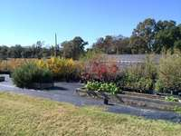 Southernnativeplants