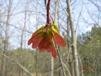 March_2011_025