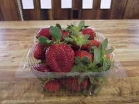Strawberry_pics_3-26-11_008